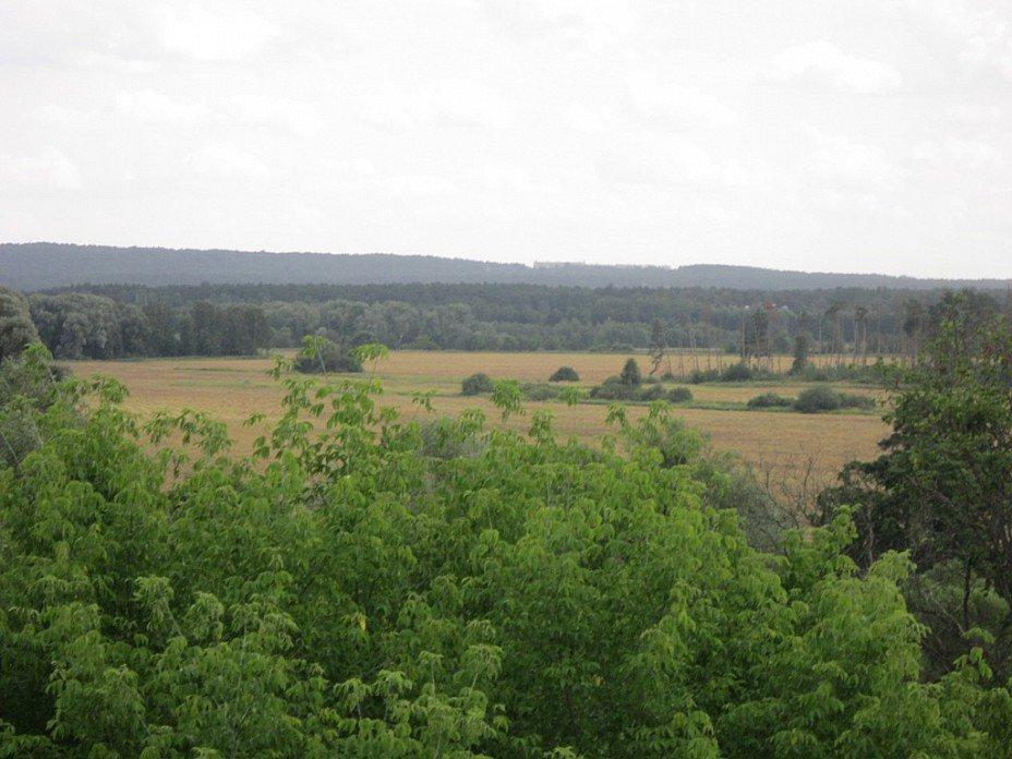 Архангельское. Вид на лес и поле - Дмитрий Никитин