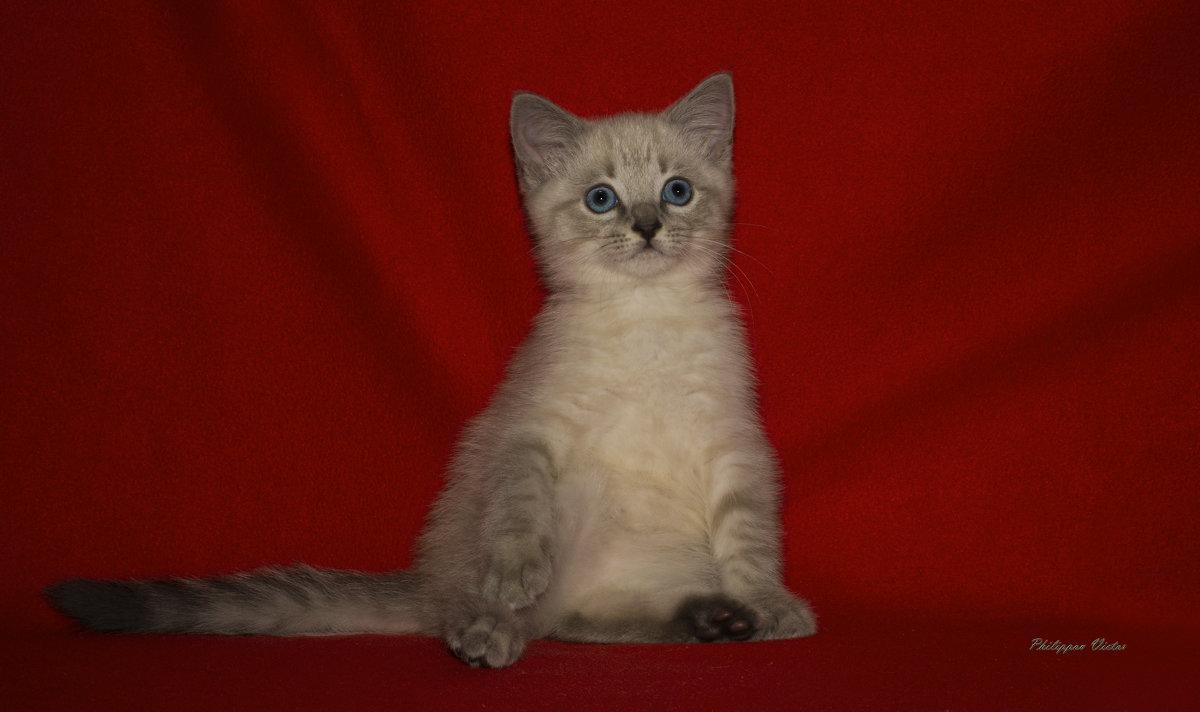 Котёнок - Виктор Филиппов