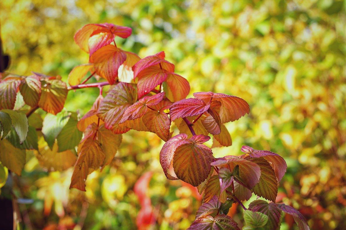 Осень - Натали