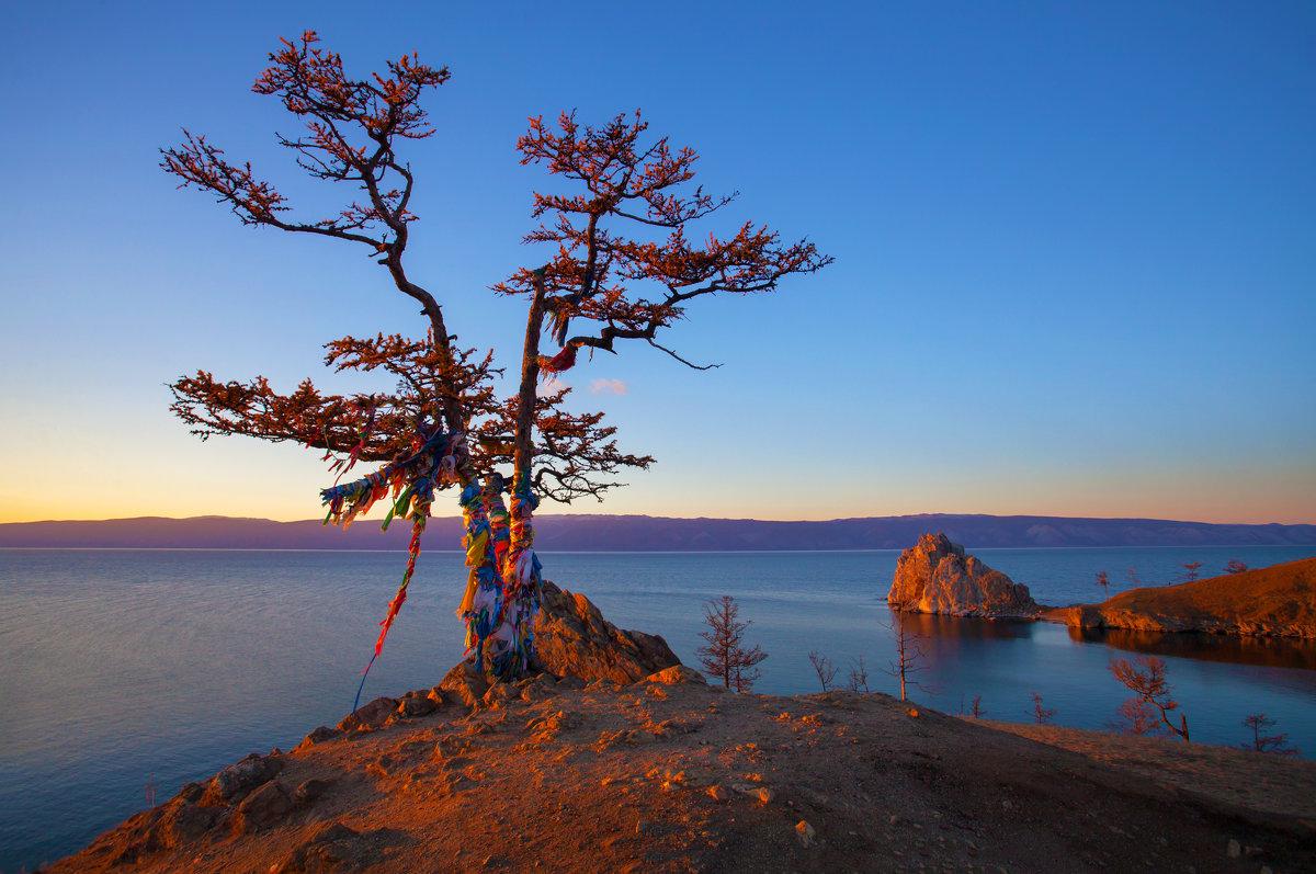 Священное дерево в лучах заката - Анатолий Иргл