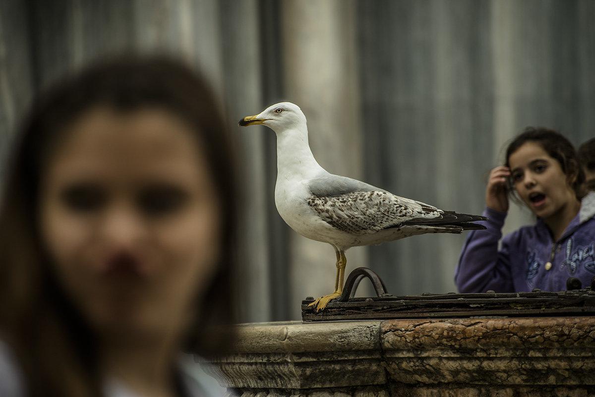 Venezia. Piazza S.Marco. - Игорь Олегович Кравченко