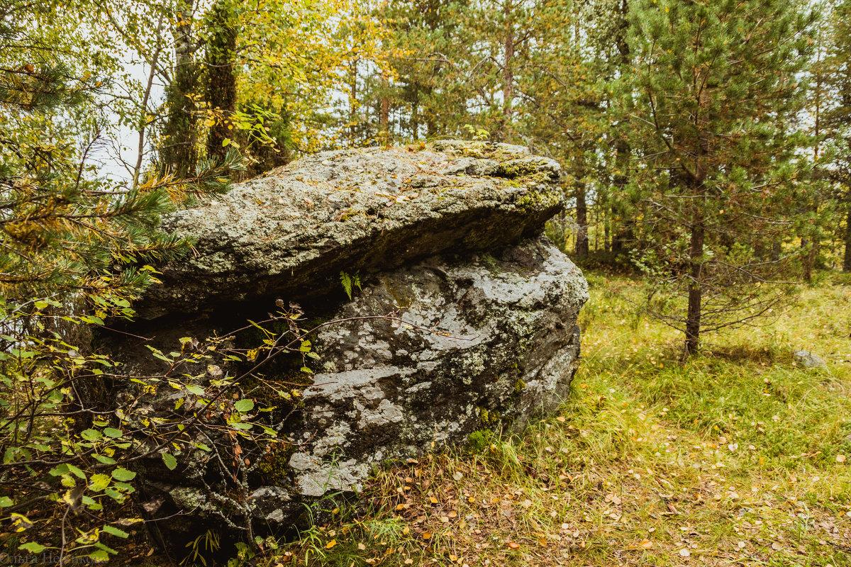 Большой камень в лесу. - Ольга Нежикова