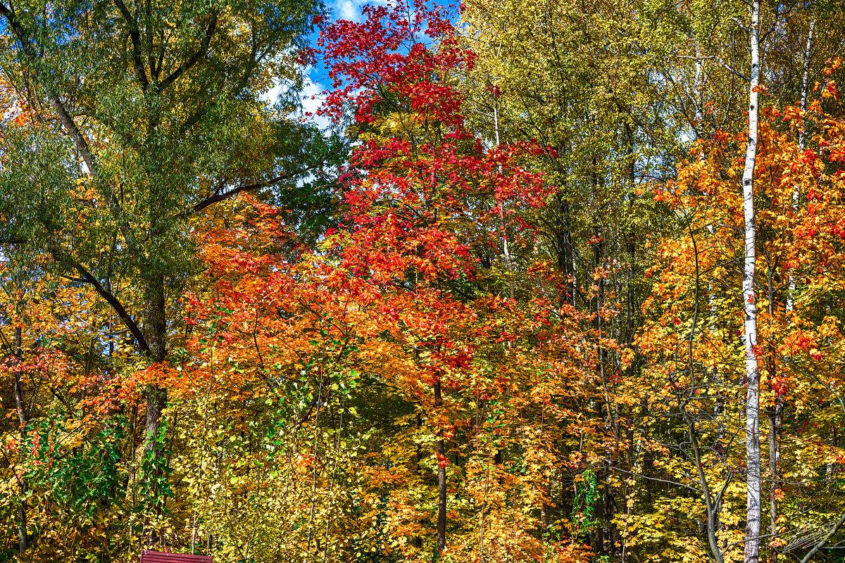 Осенние краски 3 - Сергей Филатов