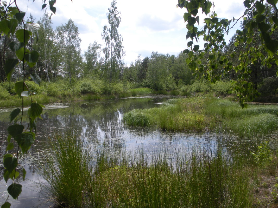 Лесное озеро - Василь Веренич