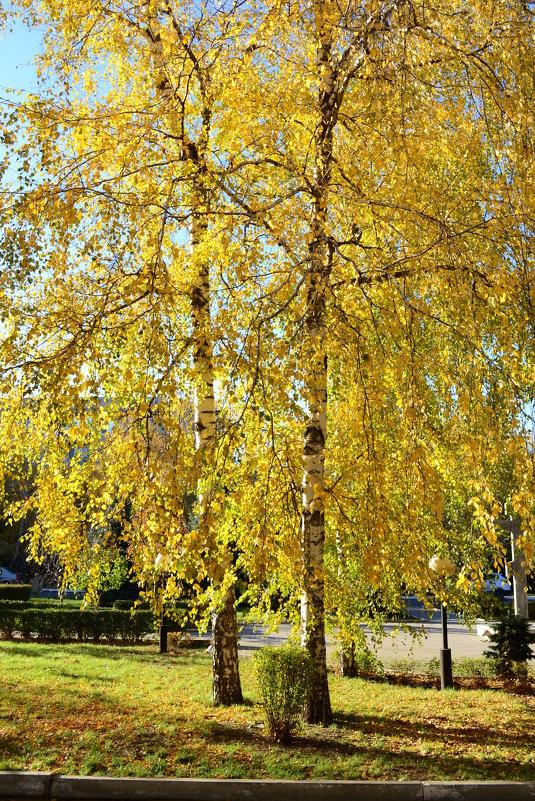 Золотая осень, золотая..... - Анастасия Фомина