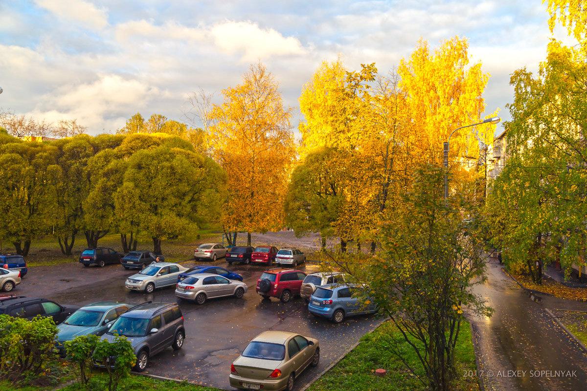 Осень рыжая подружка, просто утро во дворе... - Алексей Сопельняк