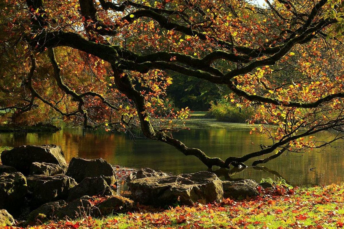 Склонила устало кленовая осень. Поникшие ветви к холодной воде. - Юрий. Шмаков
