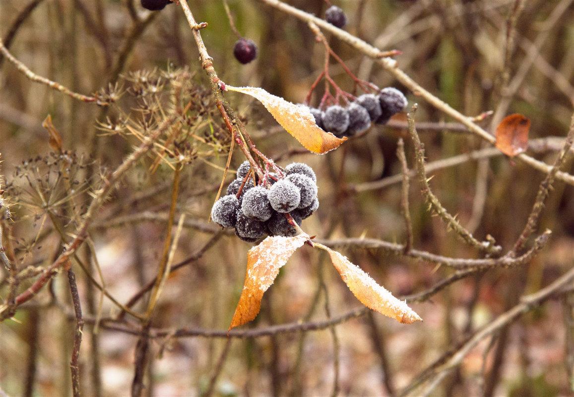 Осенние ягоды - Aнна Зарубина