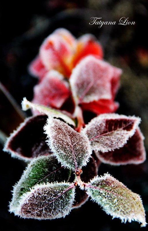 Первые заморозки - Татьяна Lion