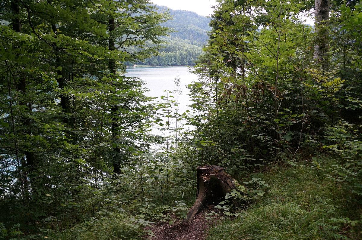 К озеру ... - Алёна Савина