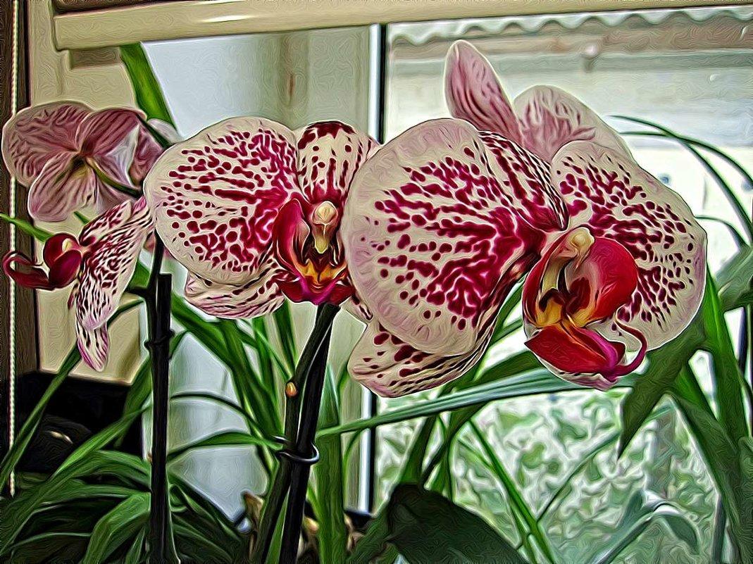 орхидея - Александр Корчемный