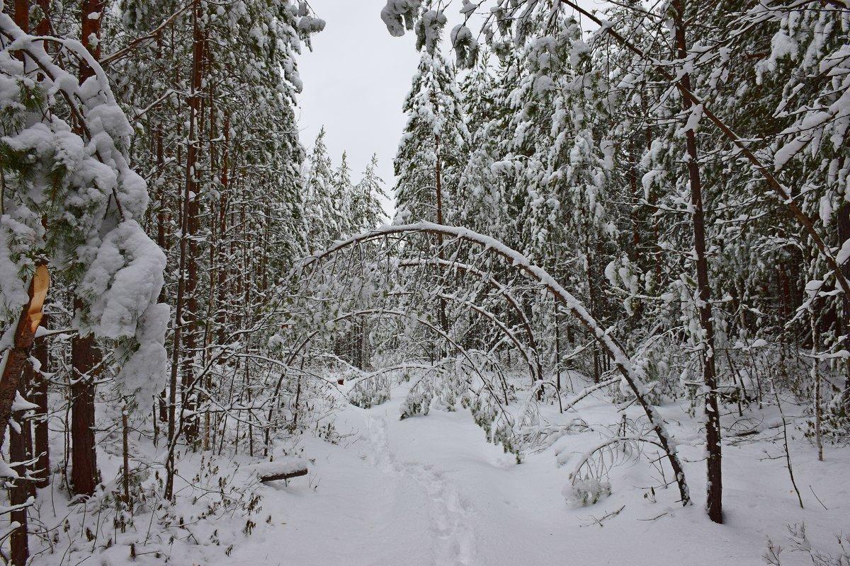В снежном царстве - Леонид Чащин