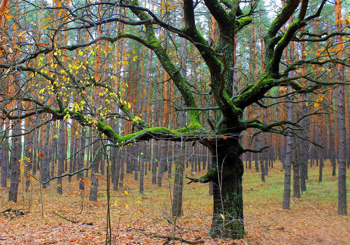 Почему у дуба листья облетели. ( В. Бояринов ) - Валентина ツ ღ✿ღ