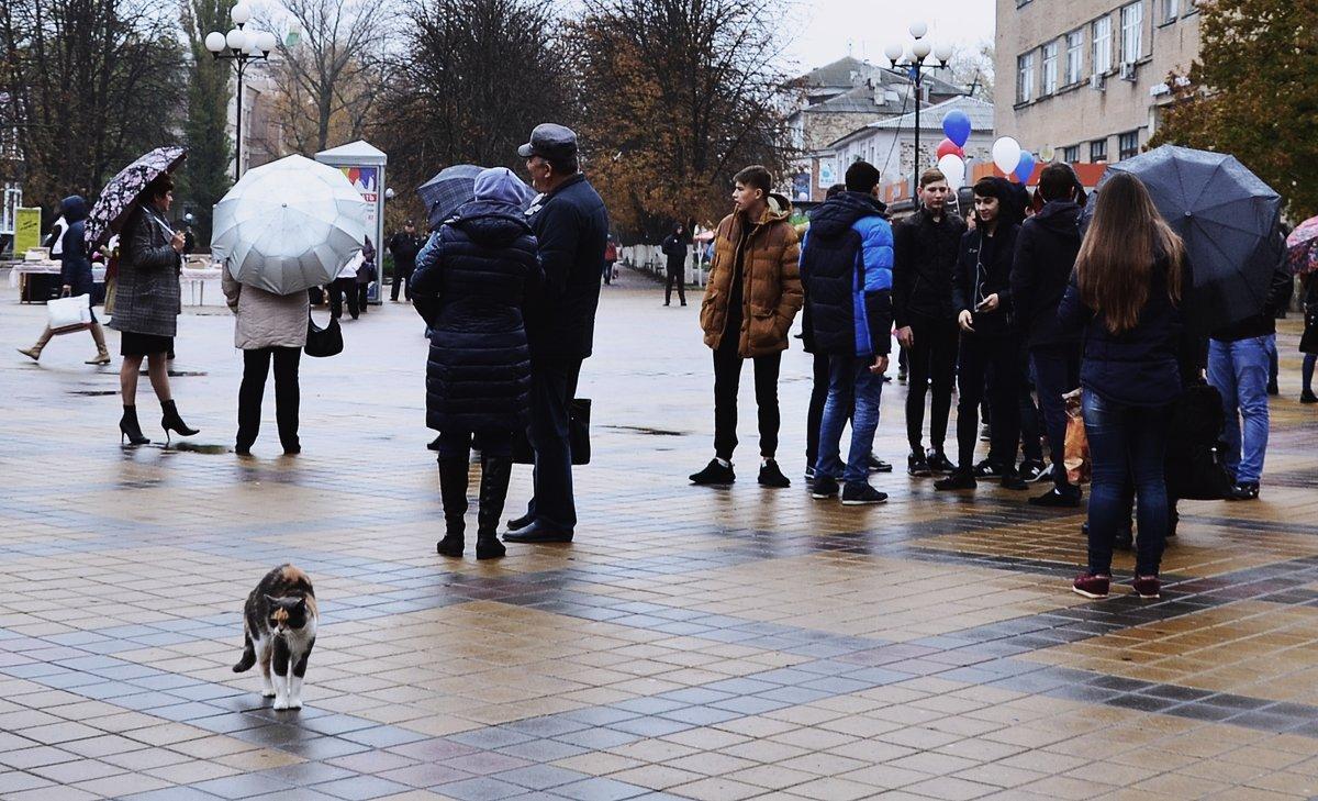 Пришла митинговать - Владимир Болдырев