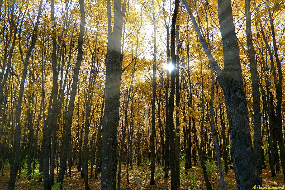 Как быстро осень пролетела золотая.. - Андрей Заломленков