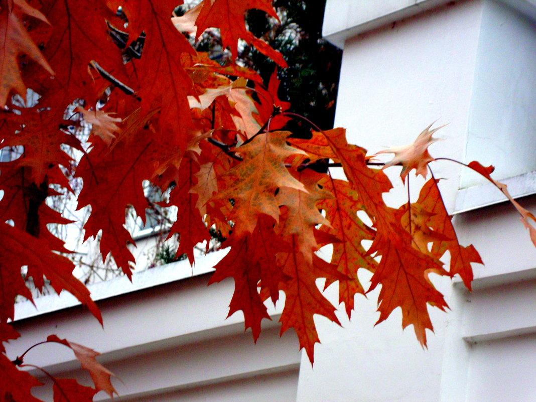 Ноябрьские листья - Marina Bernackaya Бернацкая