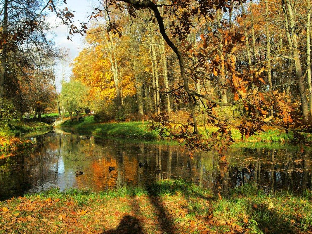 Гляделась осень в зеркало воды... - Самохвалова Зинаида