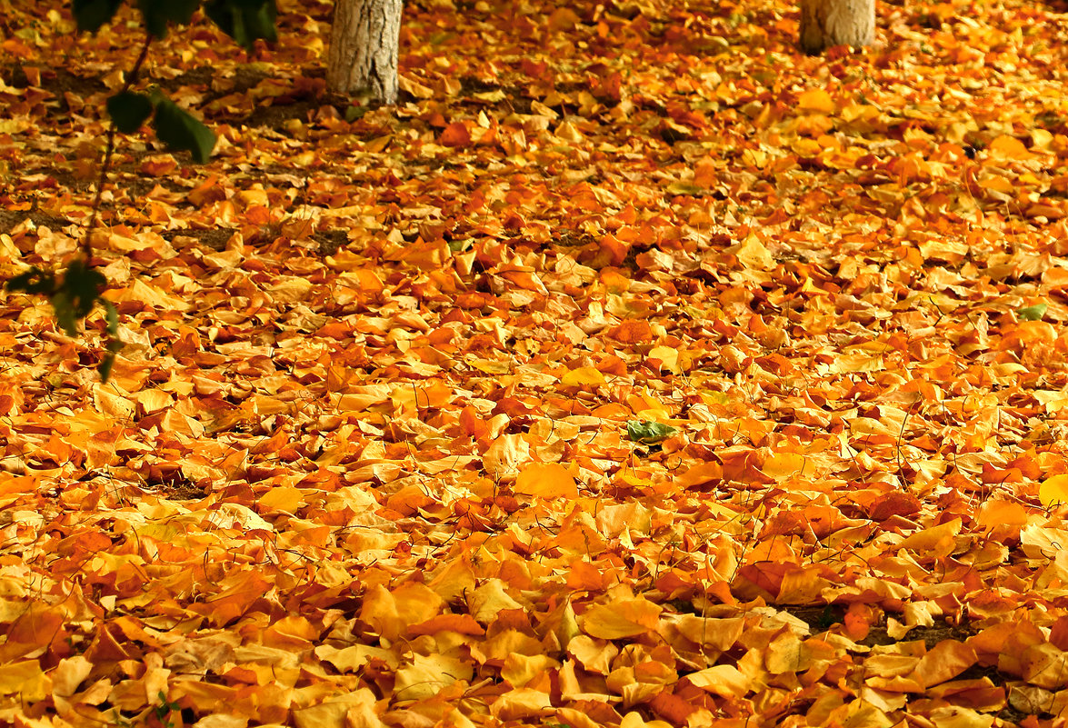 Осенний ковер - Светлана