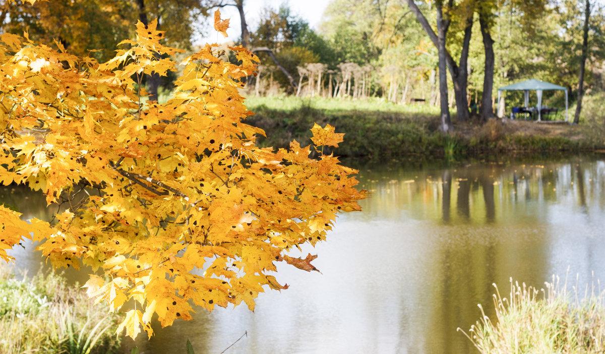 Листья желтые - Владимир Осипов