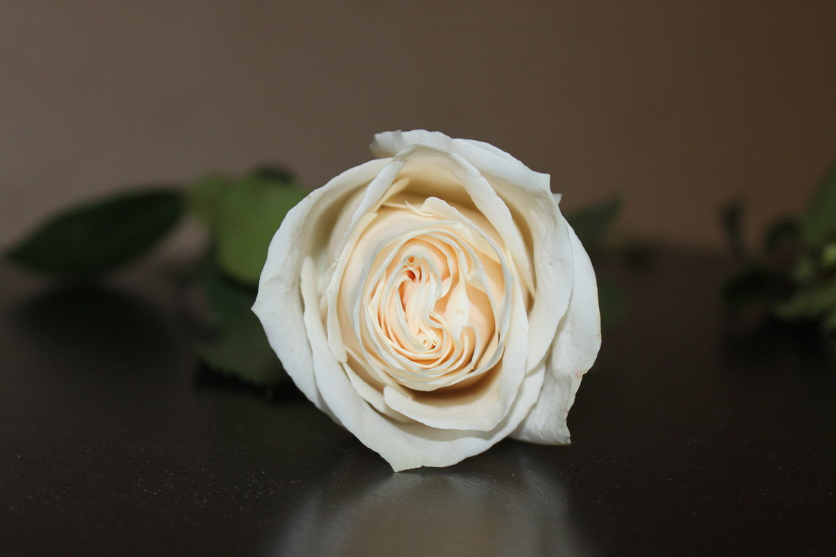 Роза - Людмила