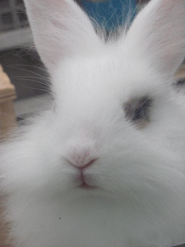 кролик - Зинаида