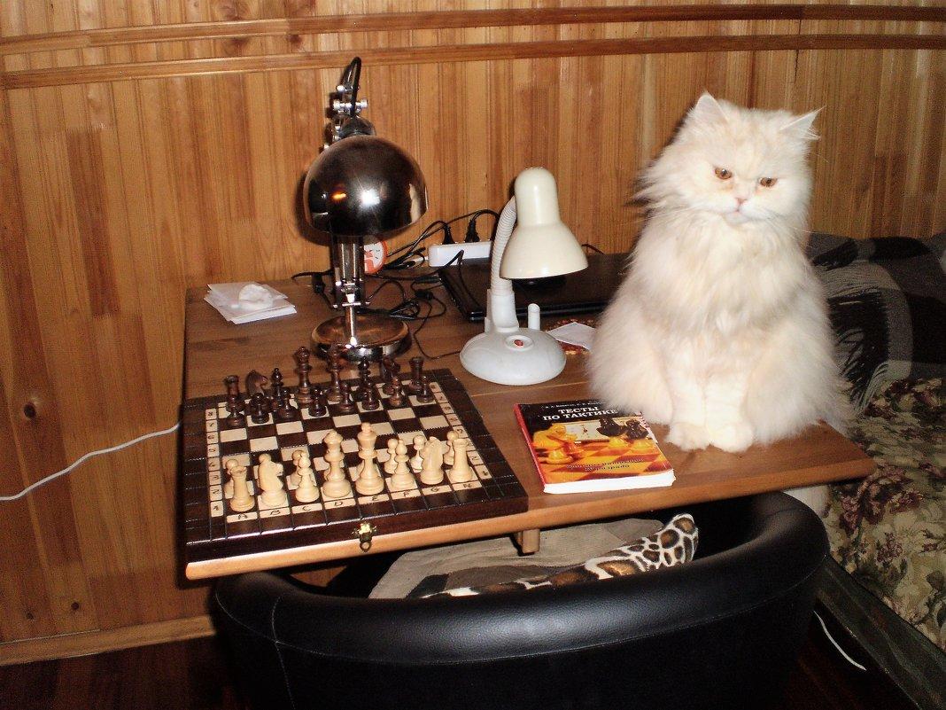 Кот шахматист. - венера чуйкова