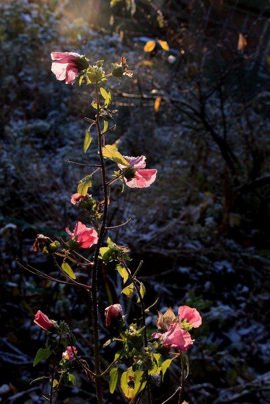 Проказы матушки-зимы - veilins veilins