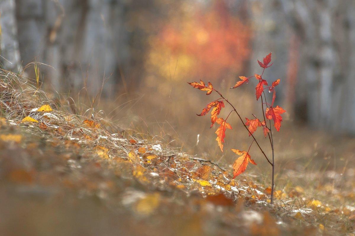 осень - константин