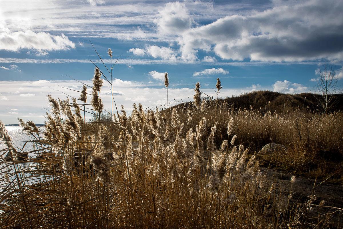 """Выцветший ноябрь.  """"Травам нужно поклониться И навечно в них влюбиться..."""" - Надежда"""