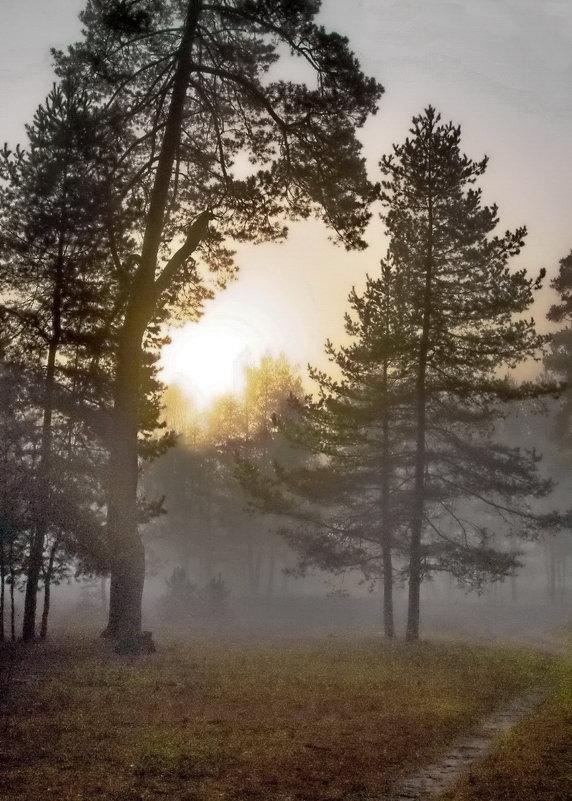 Не согреть туман холодным солнцем... - Лесо-Вед (Баранов)