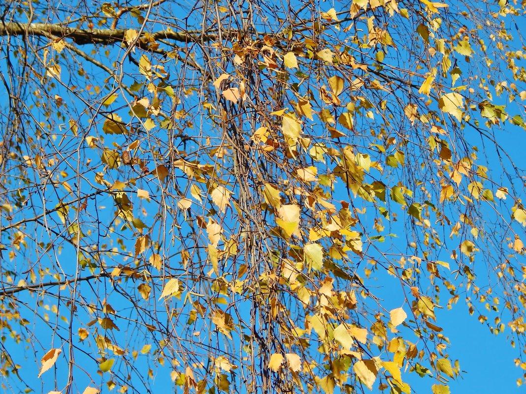 Золотые листья берёзки - Валентина Пирогова