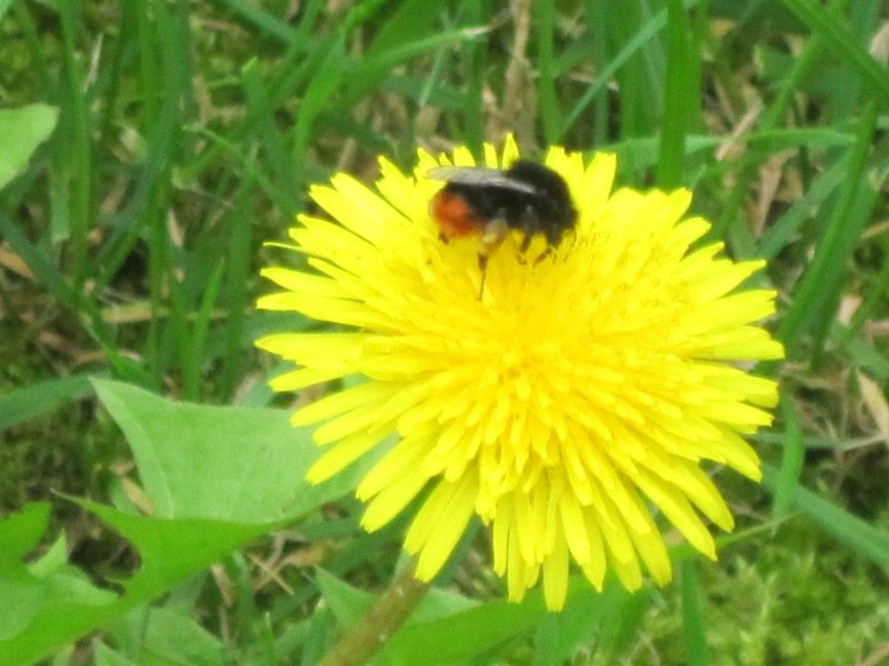 Дружат пчёлка и цветок - Дмитрий Никитин