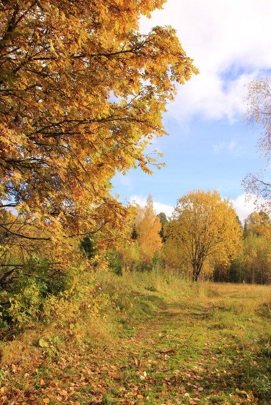 Осень... - Александр Широнин