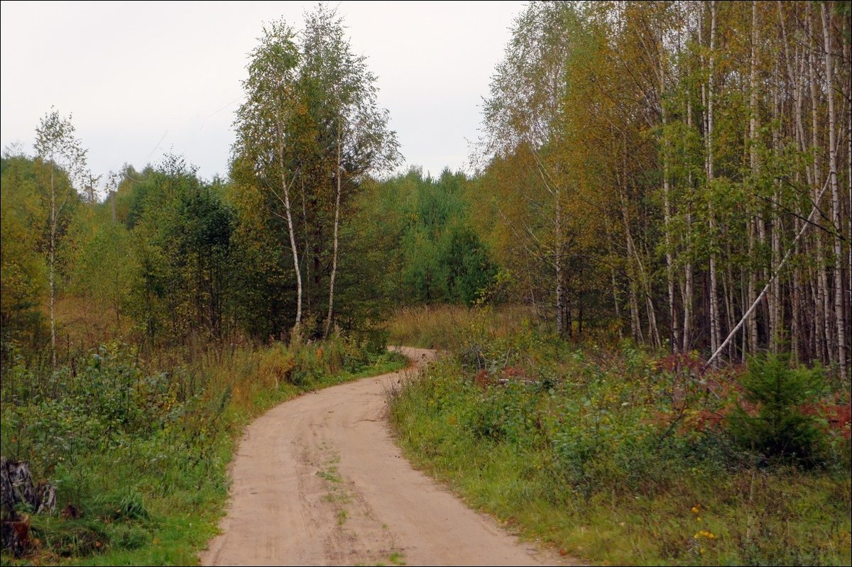 По лесной извилистой дороге... - марк
