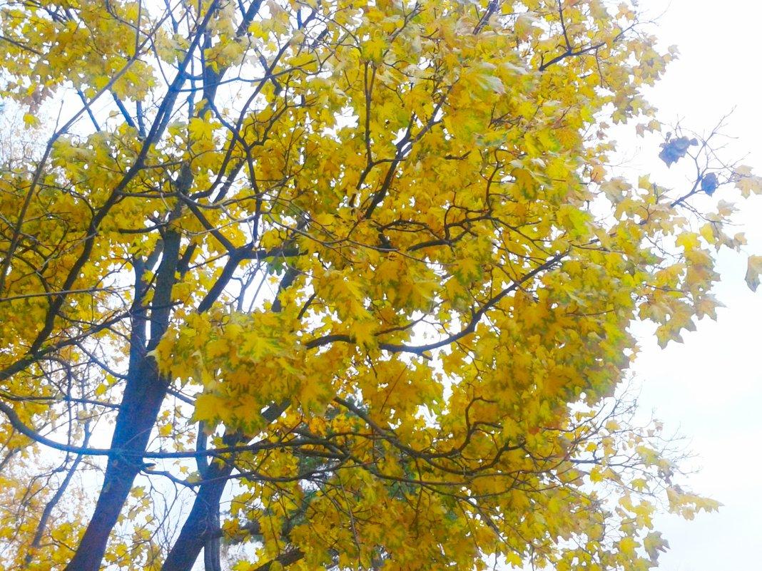 Осень золотая - Юлия Закопайло