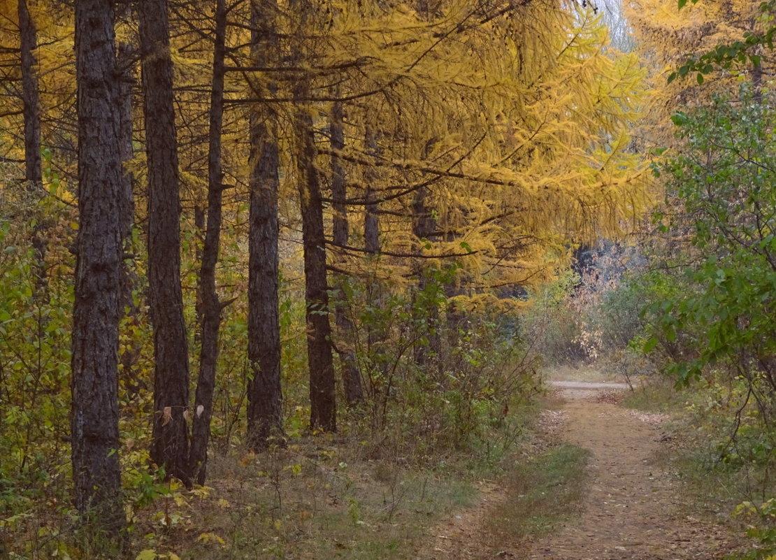 Листья падают, листья падают – неоконченный лета романс... - Елена Ярова