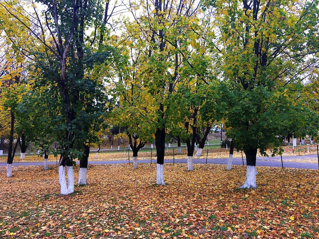 Кленовый парк - Алла ZALLA