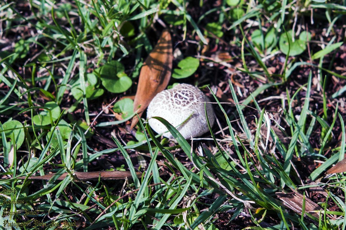 Городские грибы ..... - Aleks Ben Israel