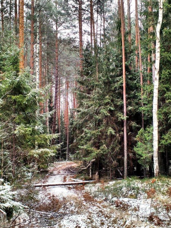 По лесной дорожке... - Николай Варламов
