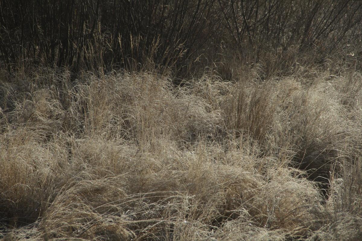 ... изморозь на  траве ... - JT --------      SHULGA  Alexei