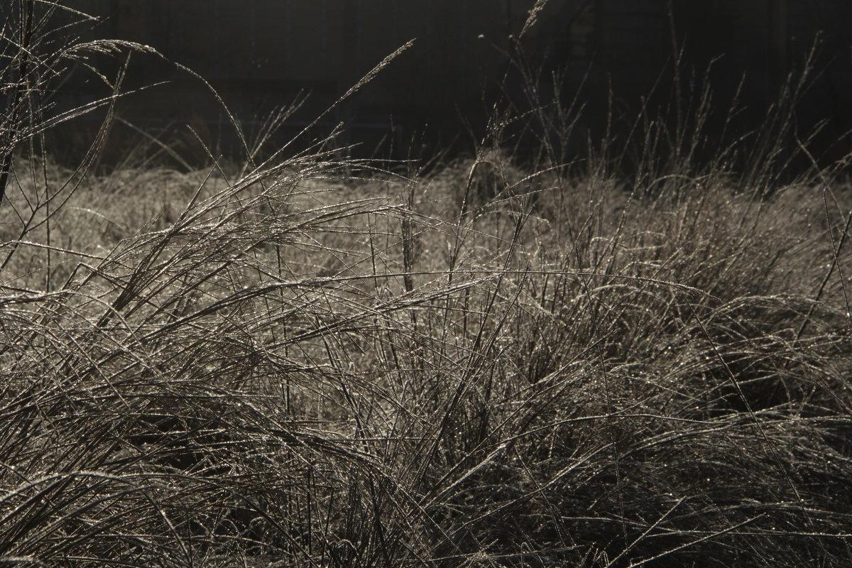 Осенняя  трава ... - JT --------      SHULGA  Alexei