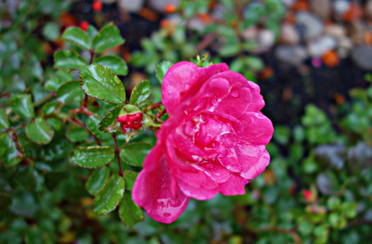 Цветы ноября..... - Galina Dzubina