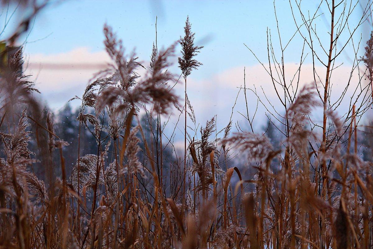 Осенний вечер на болоте - Лара (АГАТА)