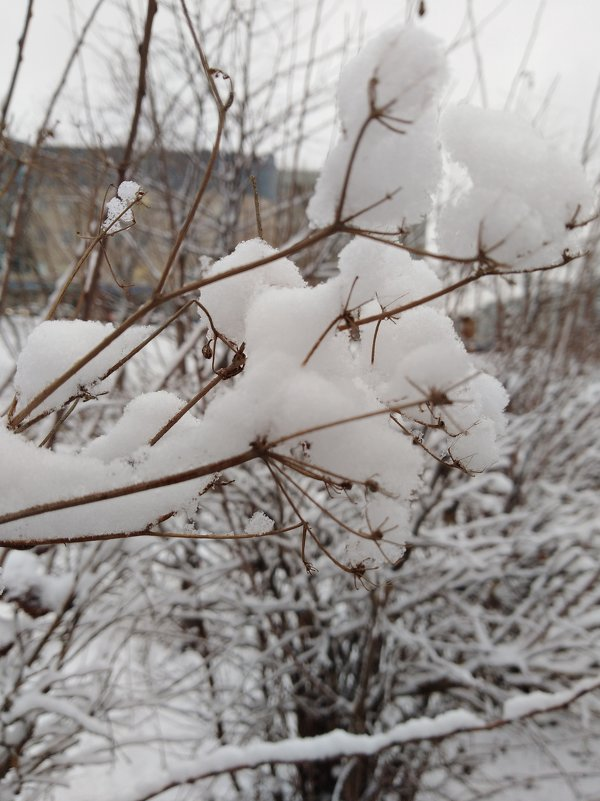 Скоро зима - Наталья
