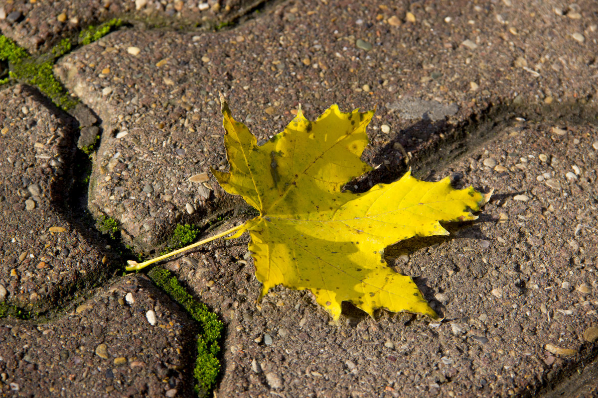 Осенний листок - Алена Д