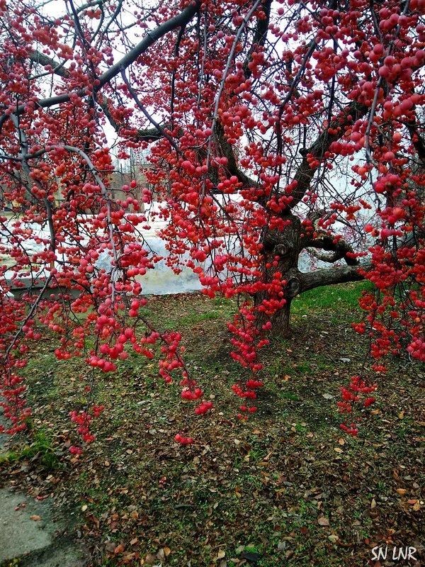 Эстафетацвета. Красный понедельник - удивительное дерево - Наталья (ShadeNataly) Мельник