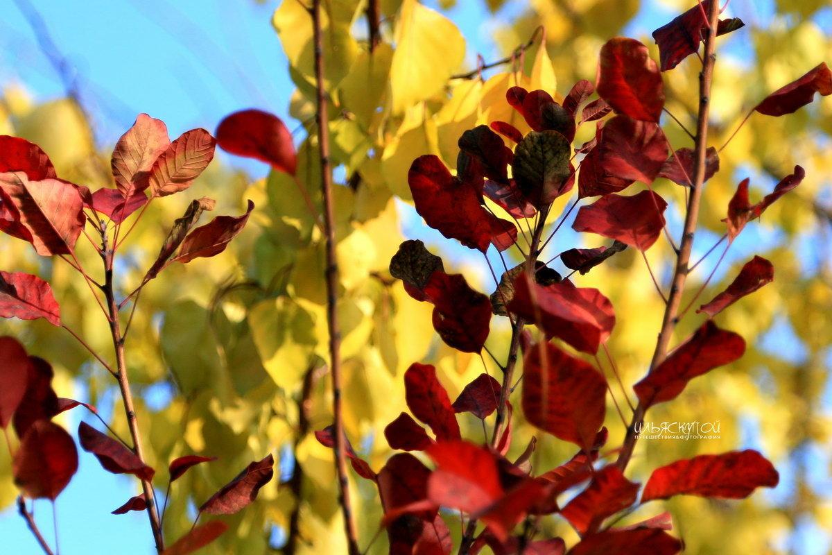 солнечным днём ноября - Илья Скупой