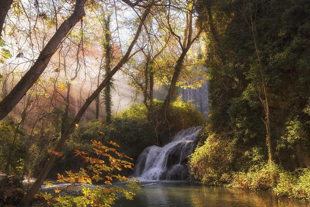Осенний лес - Maria
