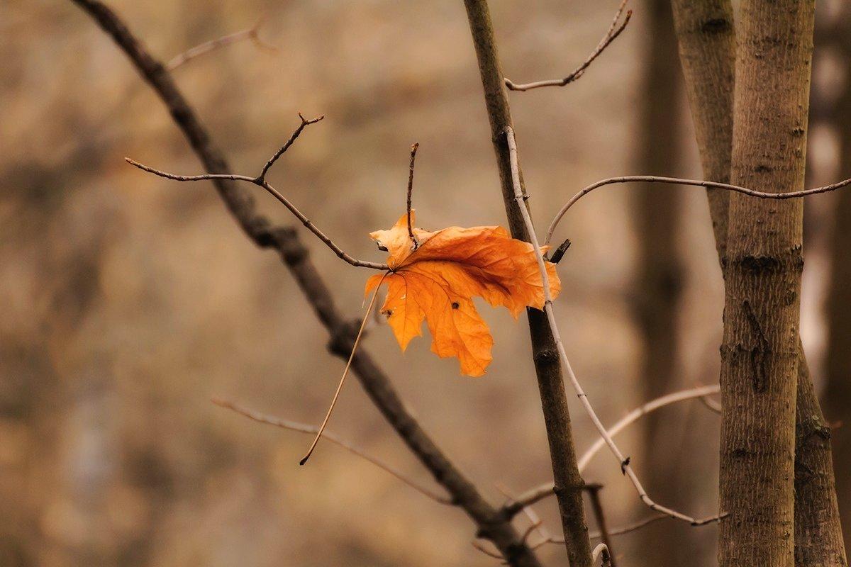 Осенний лист кленовый - Александр