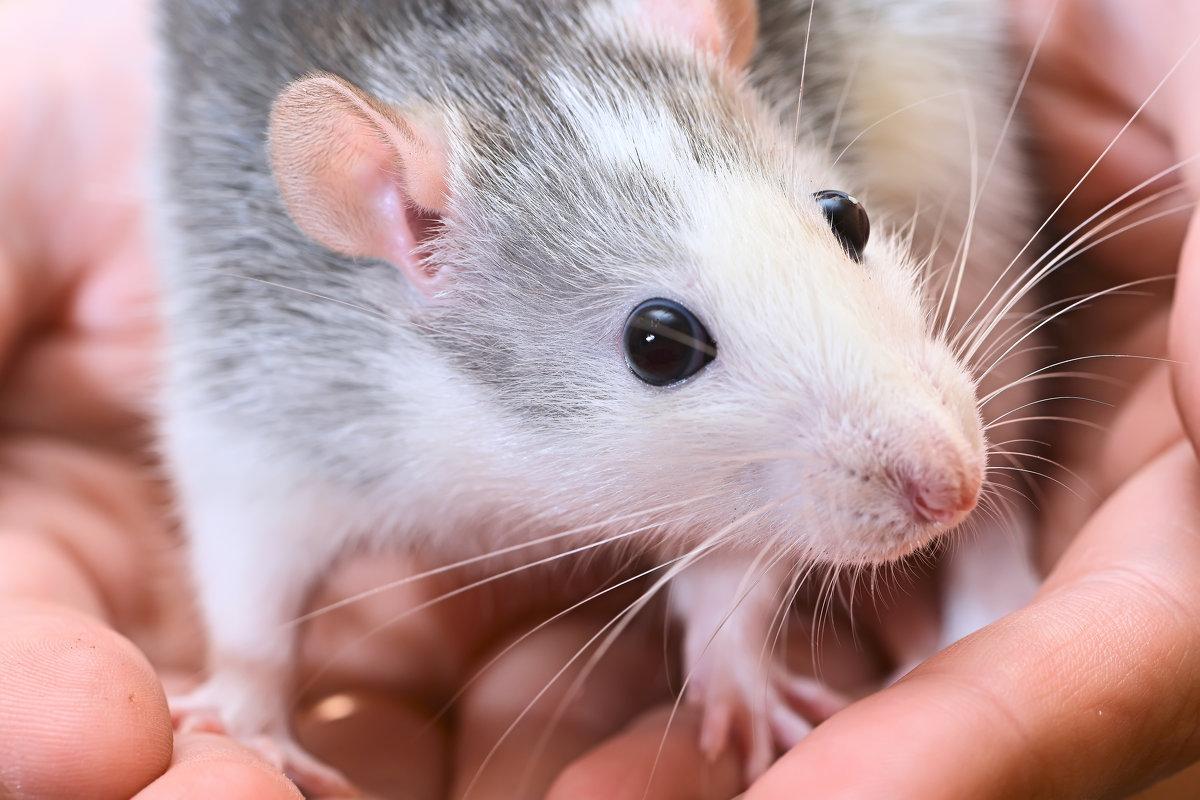 Мышь - Юрий Бичеров